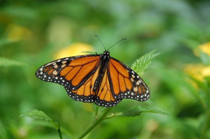 206994 vlinder natuur