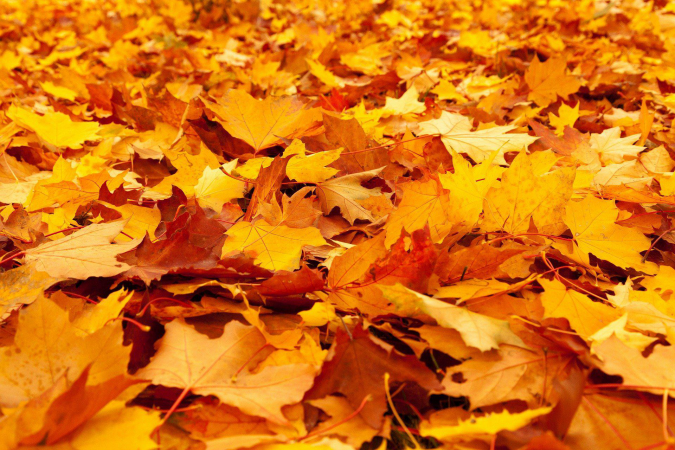 Bladeren pixabay