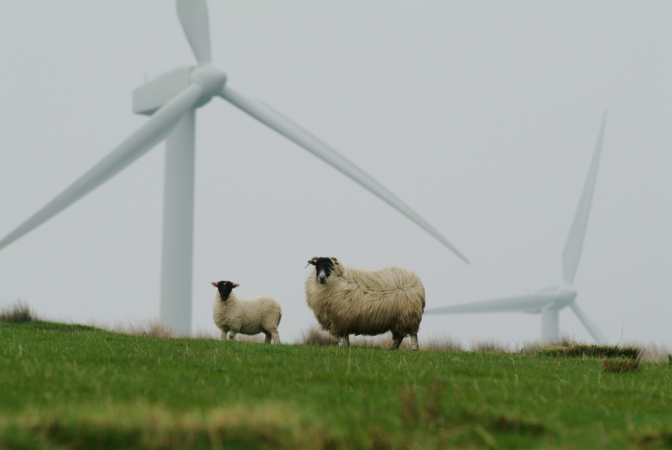 Sheep 5915813 1920