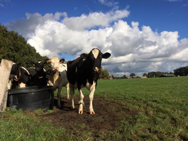 Hasseler es behoud hasselo koe