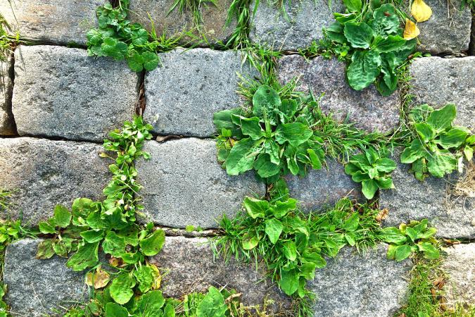 Grasstenen pixabay