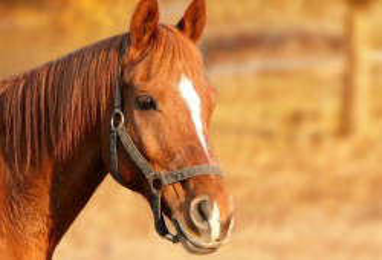 267912 horse 1201143 1920