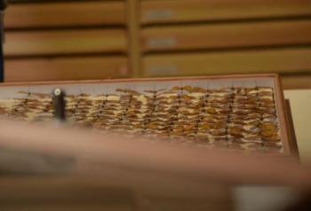 Morphovlinder Twents Kwartearken