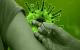 Coronavirus inenting