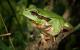 Tree frog 474949 1280