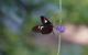 Butterfly 4853713 1280